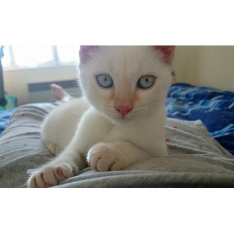 Pour tout savoir sur la manière d'éduquer un chaton, rendez-vous sur catapart.fr